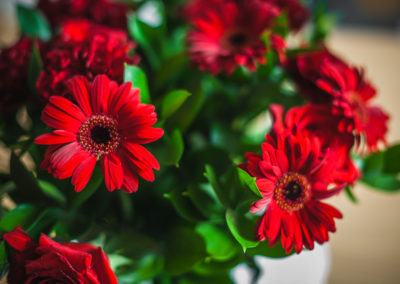 Red Gerbera display